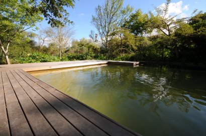 Natural systems can keep pool water clear!
